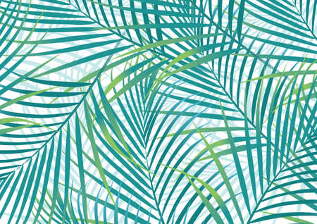 palm leaves green Illustration