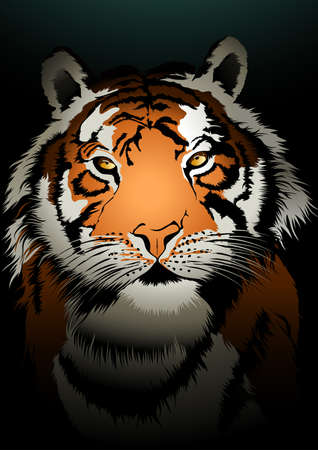 stalking: Tiger watching in the dark background illustration .