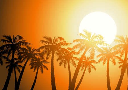 Tropical palm trees silhouette at sunrise .