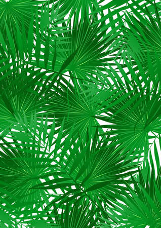 pointy: Tropical Cabbage palm on white background .