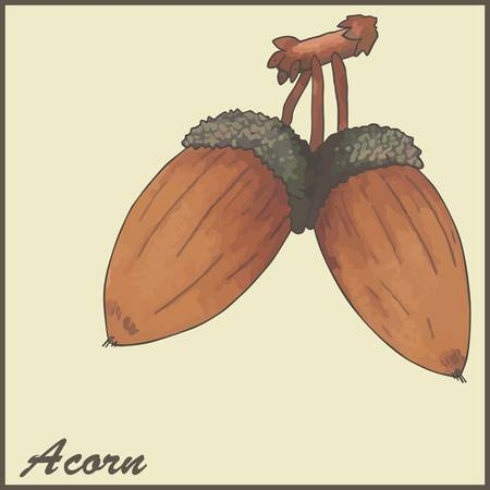 autumn vintage card with acorns Vector
