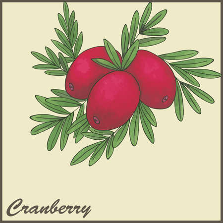 cranberries: autumn vintage card with cranberries Illustration