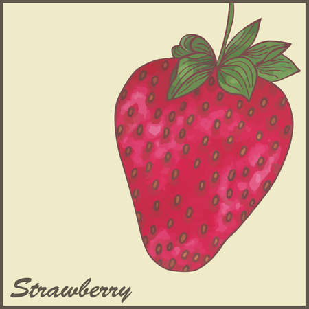 vintage styled illustration of a strawberry Stock Vector - 18374549