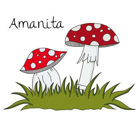 illustration of Amanita mushroom over white background Illustration