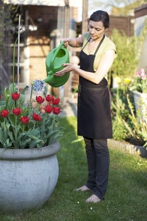 watering the plants: Woman gardening Stock Photo