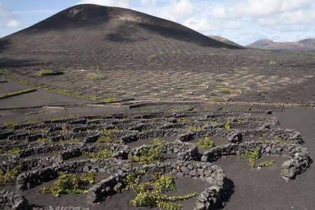 Wine growing in volanic region La Geria Lanzarote photo