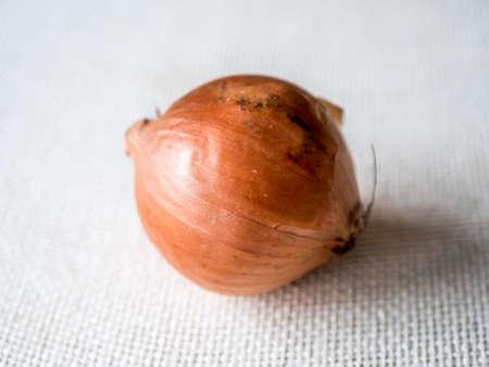 Isolated organic onion on  white background. Stock Photo - 92208726
