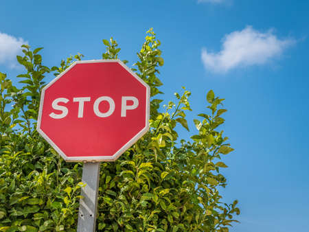 Stop sign. Tree and blue sky in background.