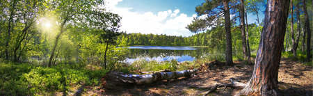 Panoramic image of a forest on the shores of Lake 写真素材