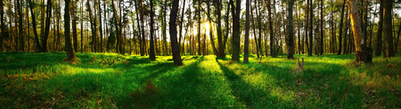 Beautiful panoramic view of forest at sunset Reklamní fotografie