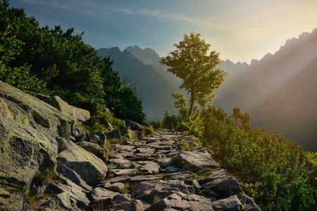 Boom en berg weg op een zonnige ochtend
