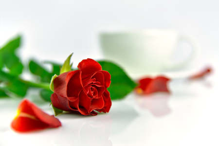 Red rose with cup of coffee in the morning. White background