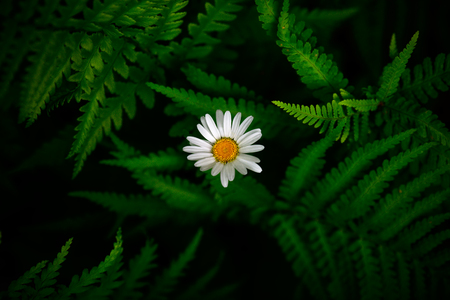 White flower between green fern leaves. Forest