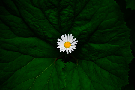 White flower on big green leaf in the forest