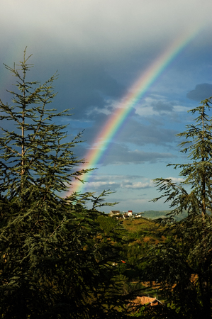 firs: Rainbow among the firs