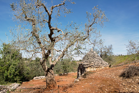 trulli: trulli country abandoned and olive tree