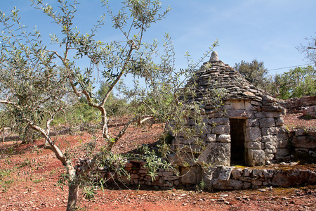 drystone: trulli country abandoned and olive tree