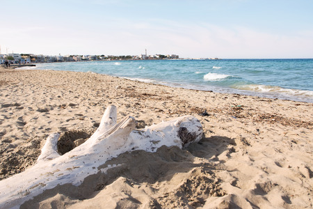 torre: The beach of cost of Apulia: Torre Canne