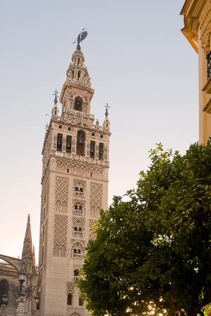 sevilla: Tower of Giralda in Sevilla (Spain): belfry of cathedral