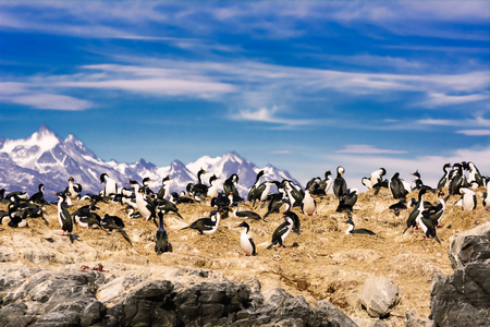 Cormorants on island on Beagle channel Stock Photo