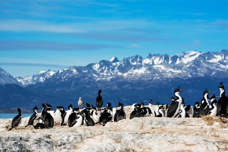 Cormorants on island on Beagle channel Stock Photo