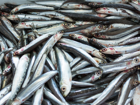 engraulis: European anchovy in a seafood market