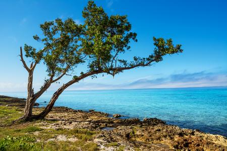キューバのプラヤラルガのロッキー海岸 写真素材