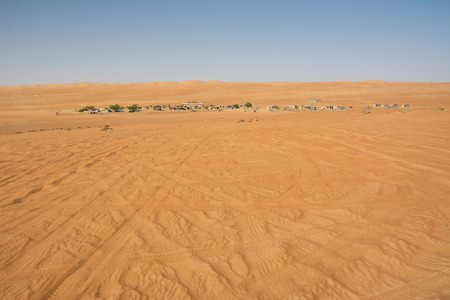 Wahiba Sand Desert and Bedouin camp in the morning (Oman)