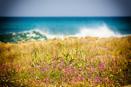 Spring wild flowers and blue sea in the background Stock Photo