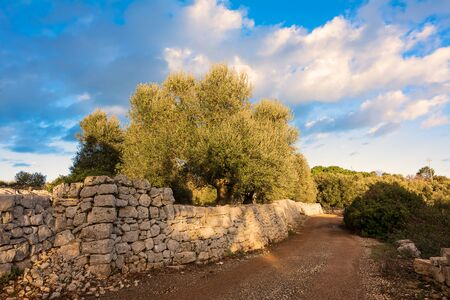 Country road with dry stone walls and olive trees in Puglia Фото со стока