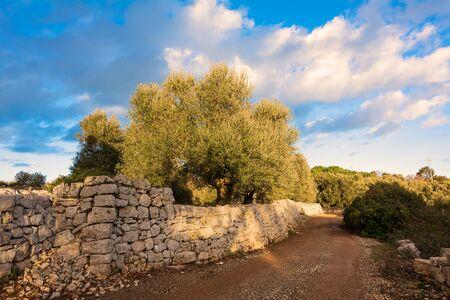 Route de campagne avec murs en pierres sèches et oliviers dans les Pouilles Banque d'images