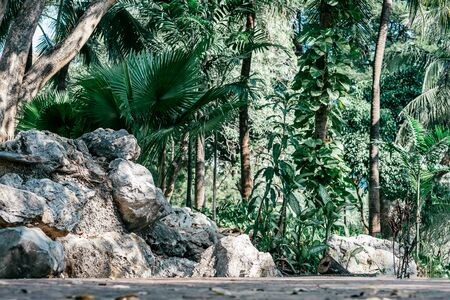 Tropical garden and sunny walking path. Blooming exotic nature in public park. Asian city recreation area. Trees and tropical plants, green foliage. Tropical nature, summer travel concept. Copy space