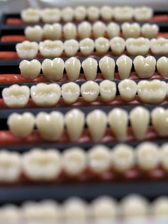dentition: dentizione, teeths