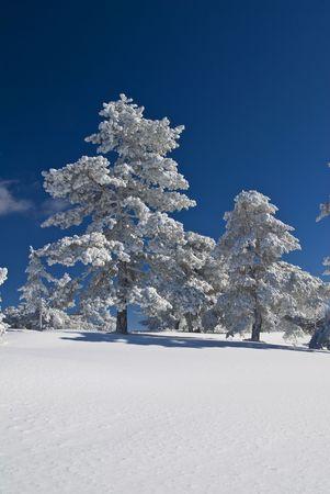 Winter Nature Stock Photo - 2679866