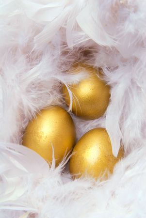 white feather: Golden eggs in white feather Stock Photo
