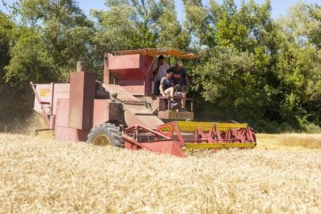 combine harvester: Cosechadoras de ma�z en el campo de trigo Editorial