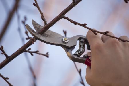 Pruning ein Obstbaum - Schneiden von Ästen im Frühjahr Standard-Bild - 18398767