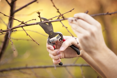 Pruning an fruit tree - Cutting Branches at spring Zdjęcie Seryjne