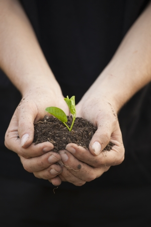 arbre: Hands holding little green plant seedleng