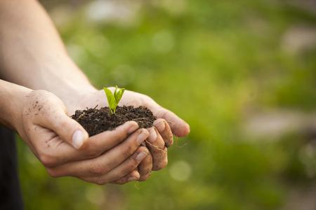 Hands holding little green plant seedleng