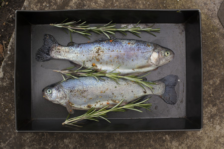 Food scenes - grilling trout. Preparing fresh fish on electric grill. Cooking and frying. Top view Standard-Bild - 104914208