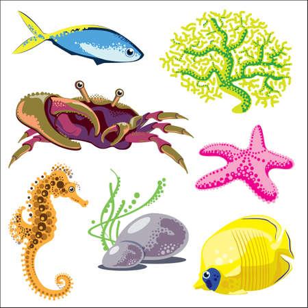 sea animals: Set of Sea Animals