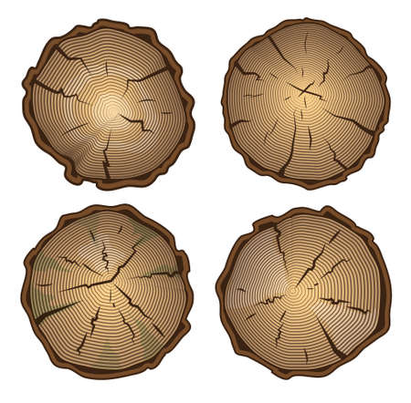 rings on a tree cut: Tree stump, round cut with annual rings. Vector illustration