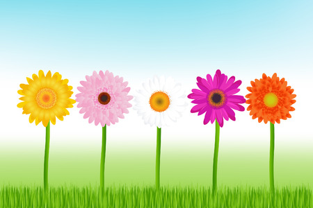 Colorful Daisies Or Herbers In The Grass Vector