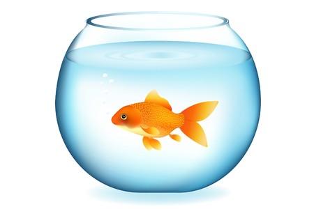 Golden Fish In Aquarium, Isolated On White Stock Photo - 7097162