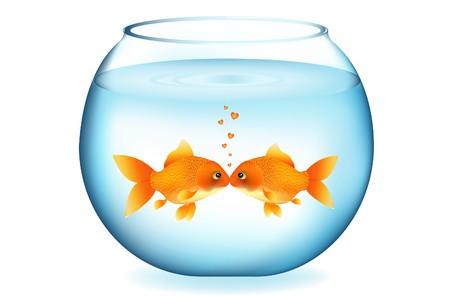 Two Goldfishes Kissing In Aquarium, Isolated On White Stock Photo - 7097219