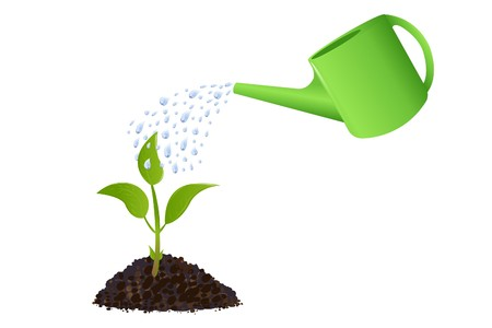 Young plant with watering can and water drops, Isolated On White photo