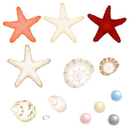 estrella de la vida: Conjunto de mar de Starfishes, Cockleshells Y perlas, aisladas en blanco  Vectores