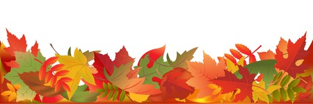 Autumn Leaves Panorama, Isolated On White Background, Vector Illustration  Vector