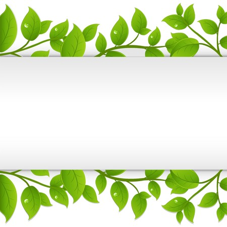 herbal medicine: Green Branches With White Paper, Vector Illustration Illustration